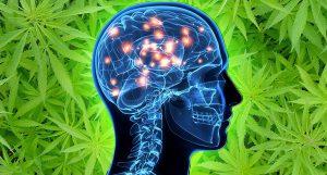 Cannabis no combate à doença de Alzheimer