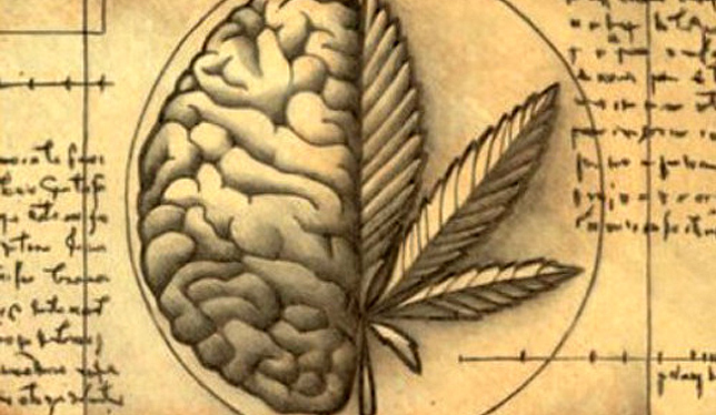 Resultado de imagem para alzheimer cannabis