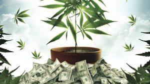 Cannabis: Boom na economia cannábica