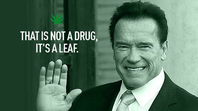 Hollyweed Banzers - Arnold Schwarzenegger