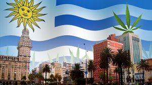Como está o cenário pós-legalização no Uruguai