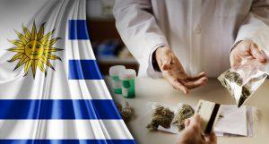 Dr Banz - Como comprar cannabis no Uruguai