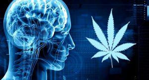 Dr Banz - Fumar maconha realmente mata neurônios?
