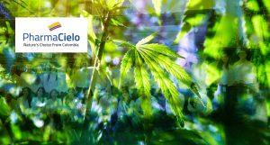 Dr Banz - PharmaCielo - Colômbia faz sua primeira exportação legal de CBD para Suíça