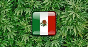 Dr Banz - México está próximo da legalização