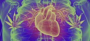Dr Banz - Hipertensão x Maconha