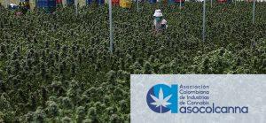 Dr Banz - Asociación Colombiana de Industrias de Cannabis