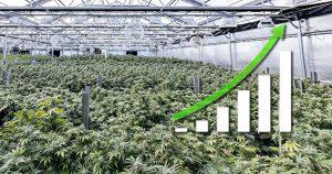 Dr Banz - Indústria Cannábica. Economia movida à Cannabis