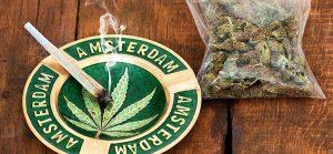 Dr Banz - Quer ser jardineiro na Holanda?